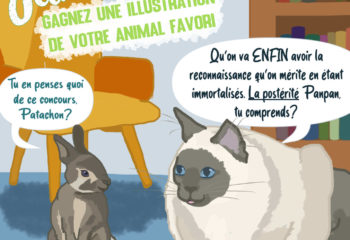 jeu concours chat lapin